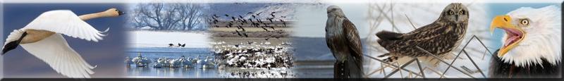 bird impressions copy