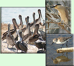 bird watching vacation - guided tour