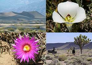 Desert Springs Tour collage