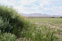 El Camino Real, New Mexico