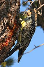 Wildlife, Chiricahua N.M.