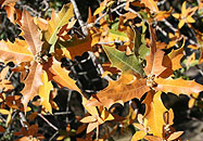 Fall Foliage, New Mexico