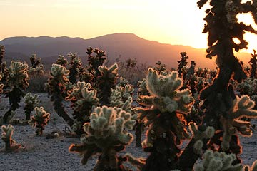 Joshua Tree National Park, sunrise View dates and rates.