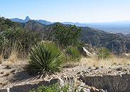 Yucca, Kitt Peak, Southwest Vacations