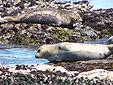 Seals in Monterey
