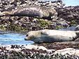 Seals in Monterey