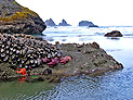 Oregon Coast and Olympic National Park
