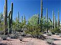 Saguaro-Sonora Desert