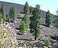 Sunset Crater NM